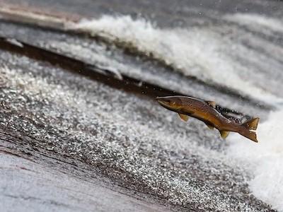 Trimethylaminuria - syndrom rybího zápachu