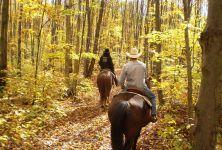Hipoterapie - léčba jízdou na koni