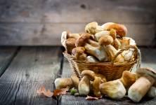 Co mohou nabídnout houby: Chrání před cukrovkou a pečují o naše srdce