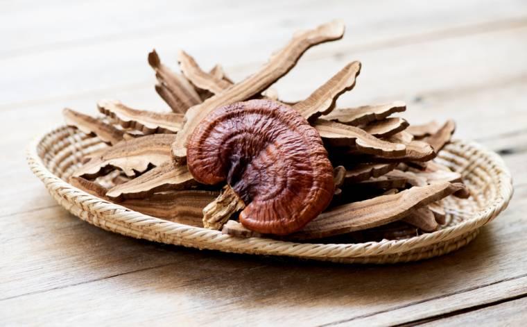 Medicinální houba Reishi: S čím vším pomůže, pro koho je vhodná a pro koho nikoliv
